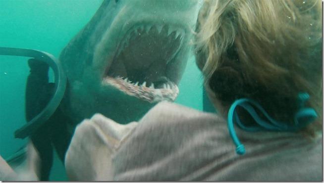Shark Night (9)