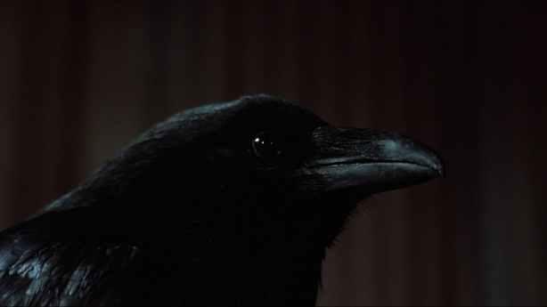 Crow, The (13)