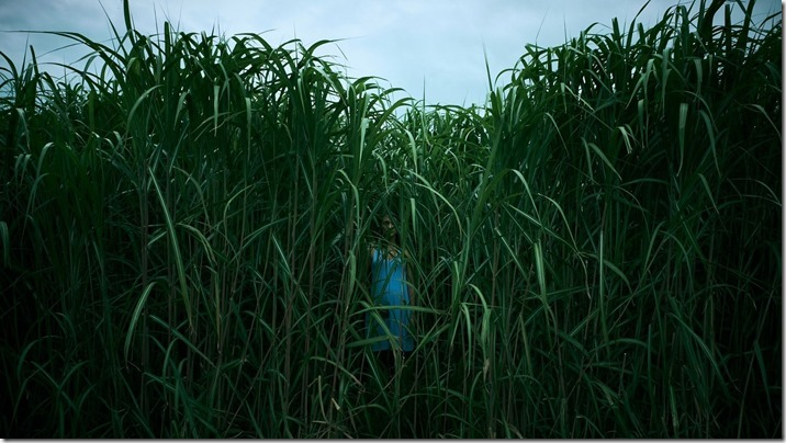 In The Tall Grass (4)